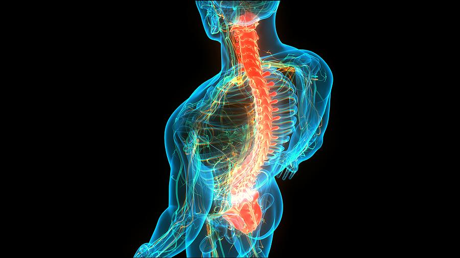 척추(Spine)